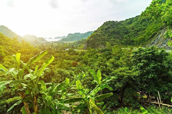 Things to do in Vietnam - Cat Ba Island